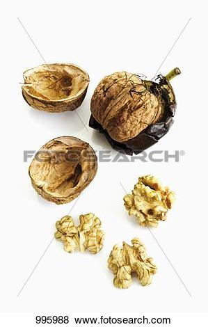 Pictures of Shelled and unshelled walnut 995988.