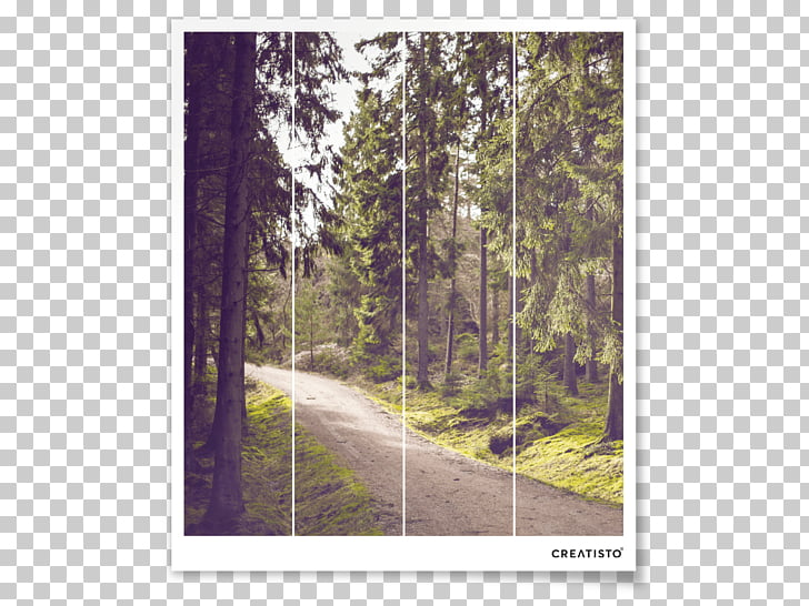 Photography Art Unsplash, forest walk PNG clipart.