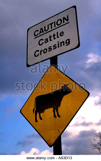 Road Sign Cattle Crossing Stock Photos & Road Sign Cattle Crossing.