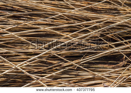 Dry reeds Stock Photos, Images, & Pictures.
