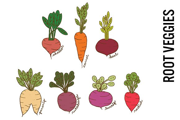 Root Vegetables Doodle Clipart ~ Illustrations on Creative Market.
