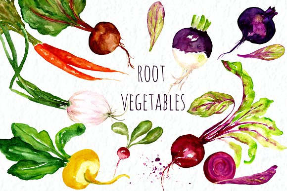 Root vegetables. Watercolor Clip Art ~ Graphics on Creative Market.