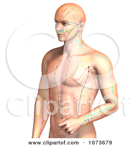 Clipart 3d Male Acupressure Acupuncture Upper Body Chart 1.
