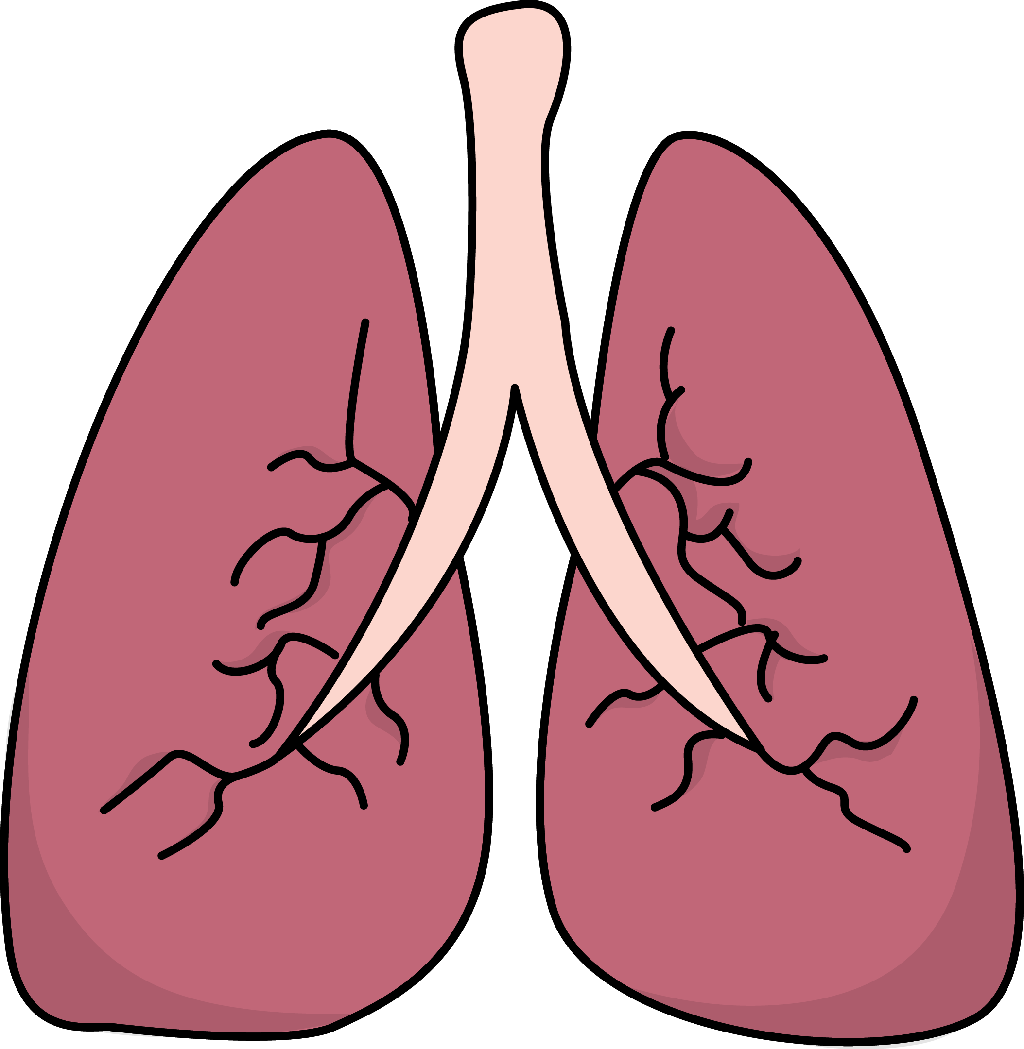 716 Lungs free clipart.