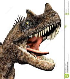 Stegosaurus stenops Age: Upper Jurassic (153.