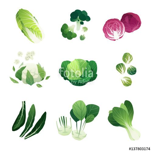 17 best ideas about Types Of Cabbage on Pinterest.