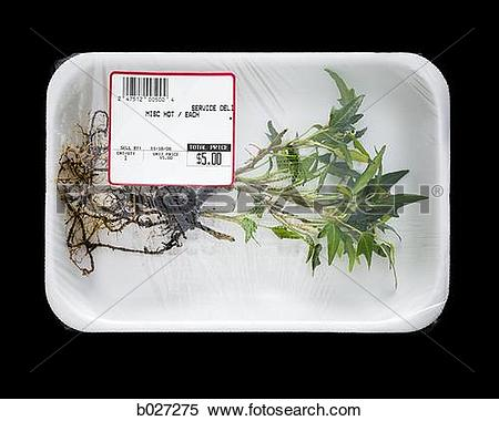 Stock Image of uprooted plant in supermarket packaging b027275.