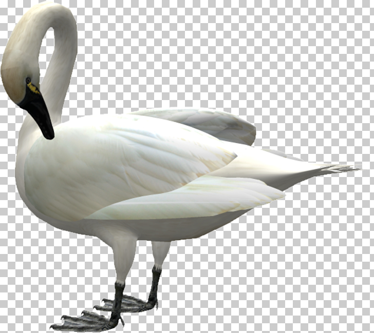 Swan Bird Icon, Goose down PNG clipart.
