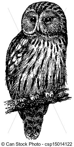 Vector Illustration of Bird Ural Owl csp15014122.