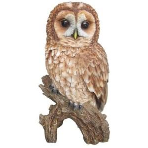 Owls ~ 100.
