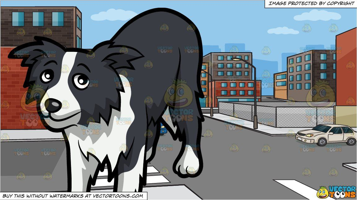 clipart #cartoon A Shy Border Collie Puppy and An Urban.