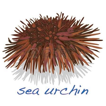 73 Fresh Urchin Stock Vector Illustration And Royalty Free Fresh.