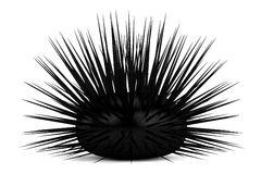 Sea Urchin Stock Illustrations.