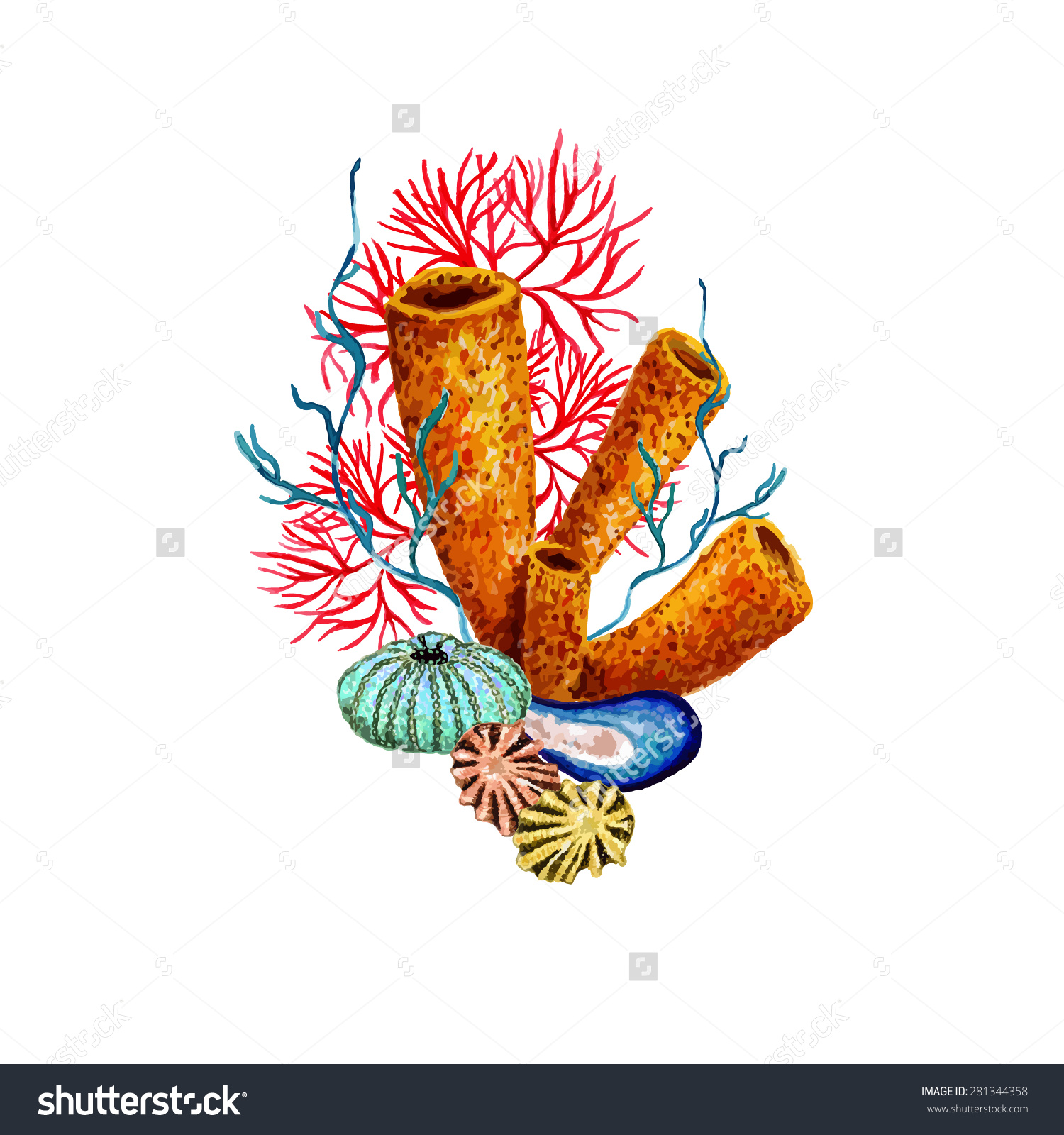 Watercolor Sponge Coral Sea Urchin Shell Stock Vector 281344358.