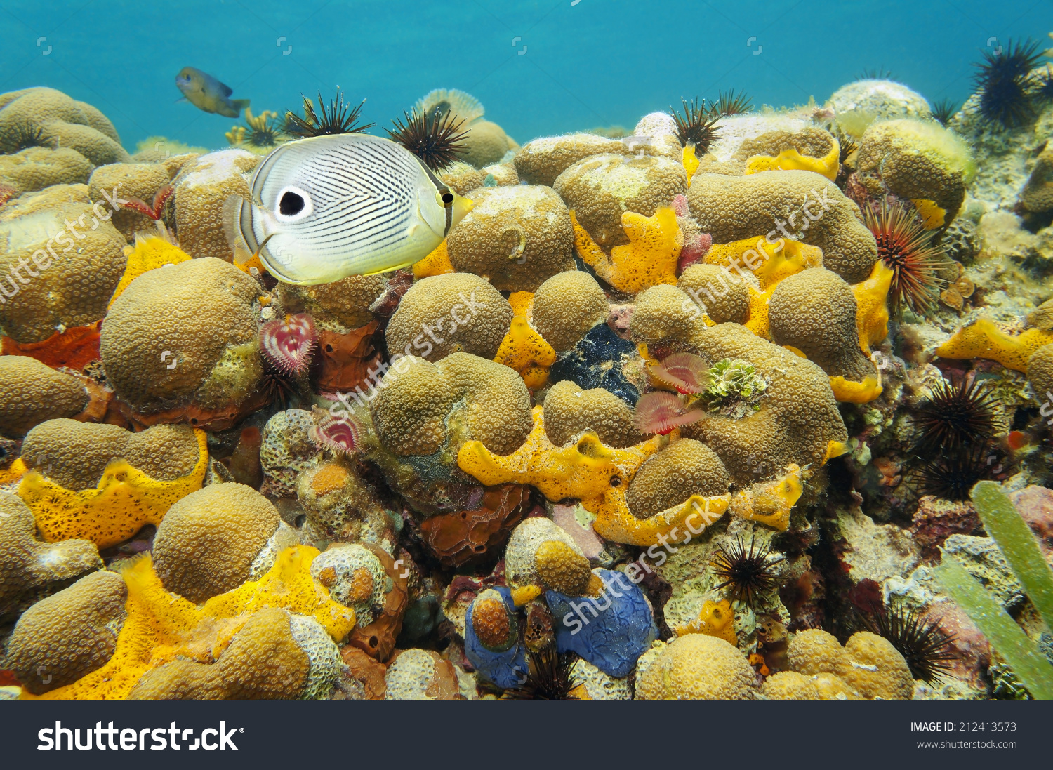 Colorful Coral Reef Under Water With Sea Sponge, Fan Worm, Urchin.