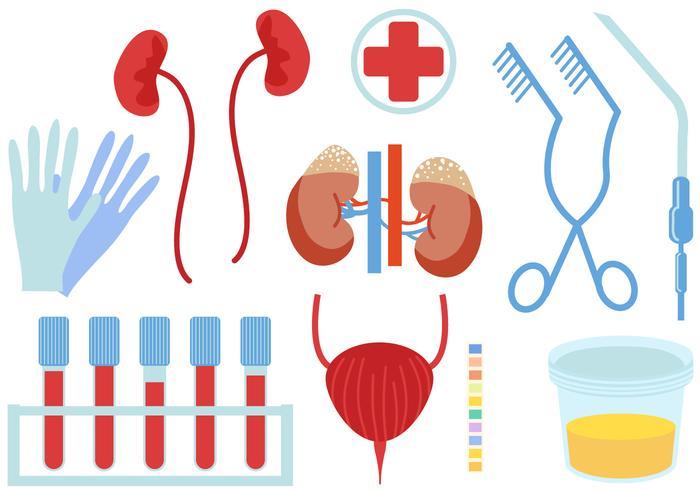 Urology Free Vector Art.