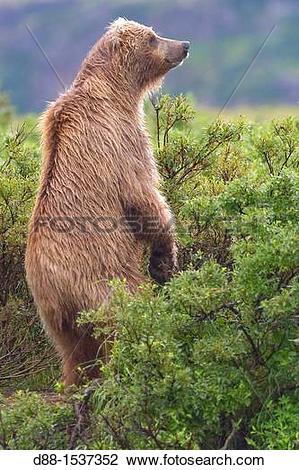Stock Photo of Alaska , Katmai National Park and Preserve.