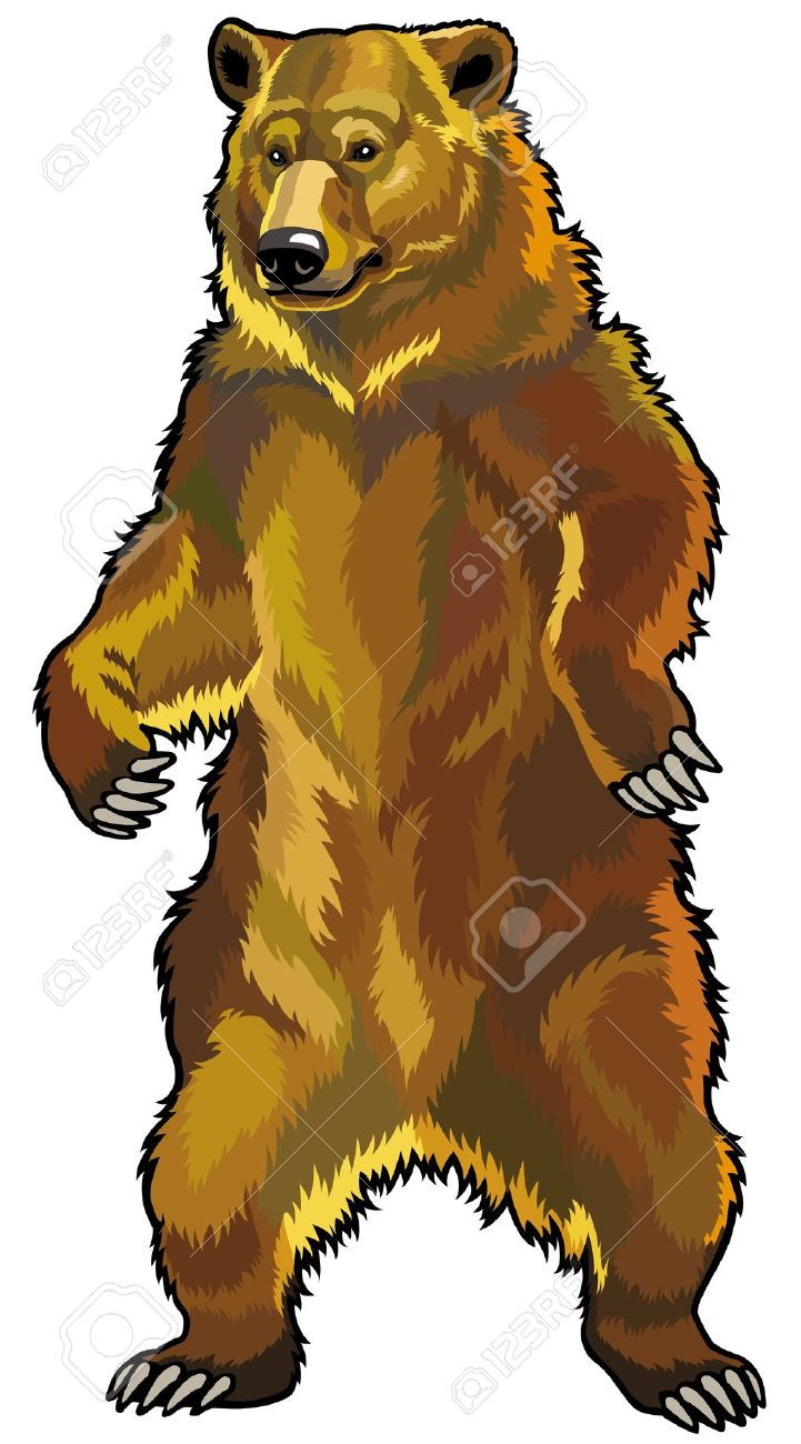Grizzly Bear,ursus Arctos Horribilis,front View Picture Isolated.