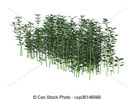 Stock Illustration of 3D Illustration Urtica Dioica or Nettle on.