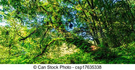 Stock Fotos von Natur, groß, Bäume, grün, wald, urzeitlich.