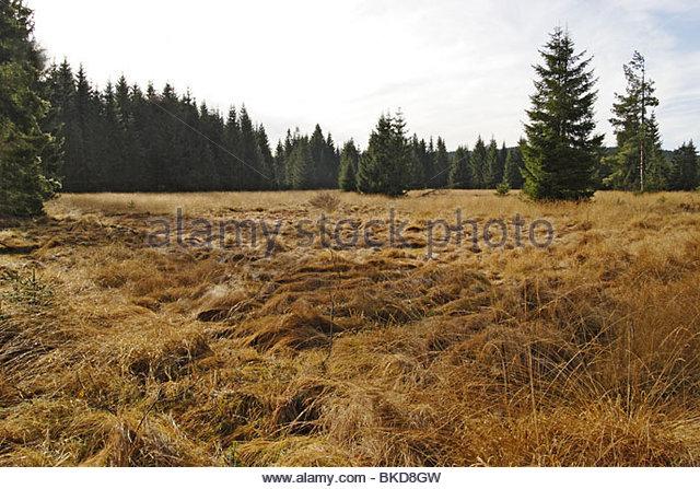 Urzeitlich Stock Photos & Urzeitlich Stock Images.
