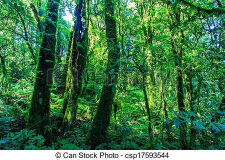 Stock Foto von Natur, groß, Bäume, grün, wald, urzeitlich.