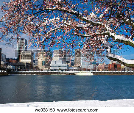 Stock Photo of Snow on cherry blossoms in downtown Portland.