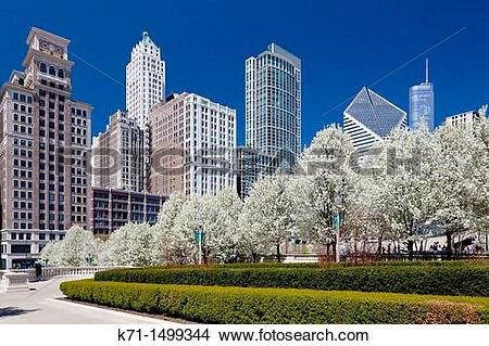Stock Photo of Blossoming cherry trees in Millenium Park with city.