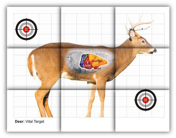 deer vitals target.