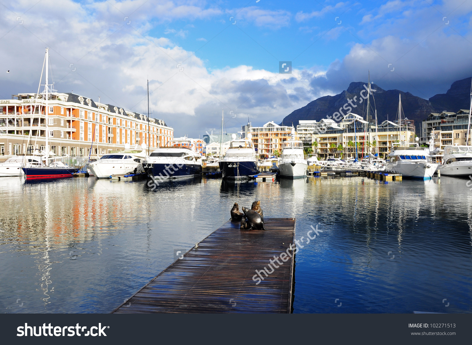 Sea Lion On A Jetty In Cape Town V&A Waterfront Stock Photo.