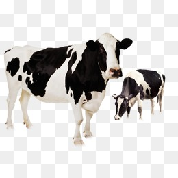 Vaca Png (105+ images in Collection) Page 2.