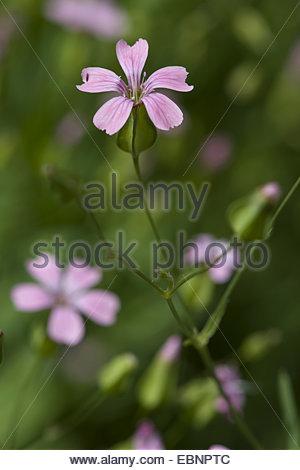 Bg Stock Photos & Bg Stock Images.