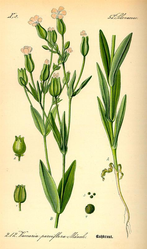 Flora von Deutschland Österreich und der Schweiz (1885). Põld.