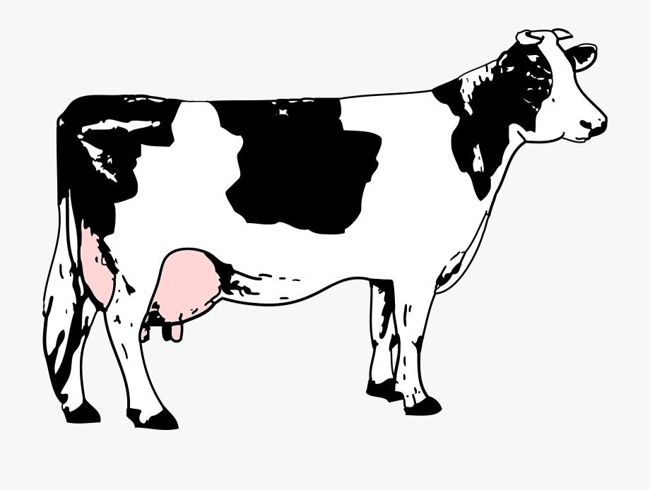 Clipart Cow Black And White / Vache Blanche Et Noire.