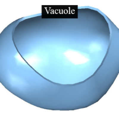 Download Free png Vacuole png 1 » PNG Image.
