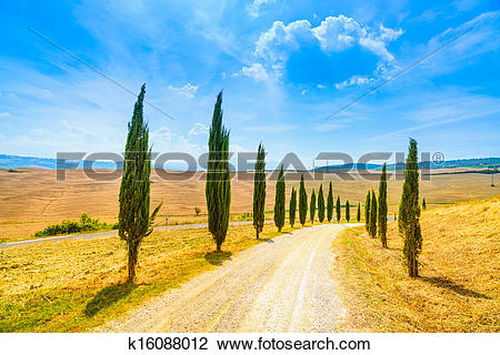 Stock Photo of Cypress Trees rows and a white road rural landscape.