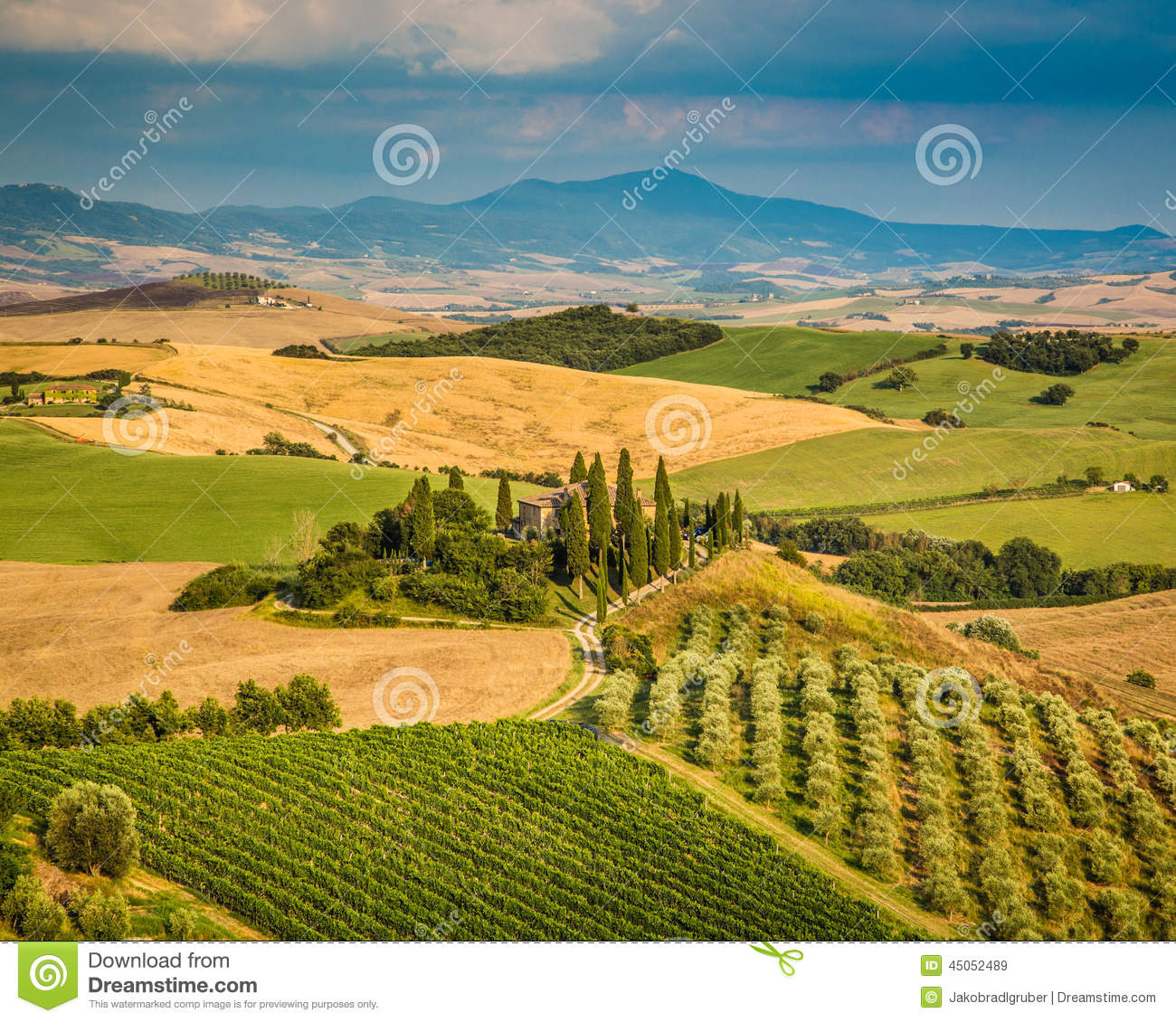 Scenic Tuscany Landscape At Sunset, Val D'Orcia, Italy Stock Photo.