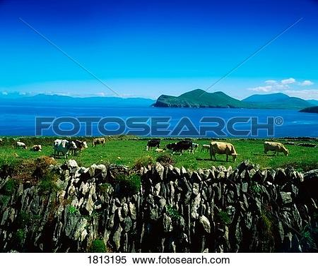 Stock Image of Valentia Island, Ring of Kerry, Co Kerry, Ireland.