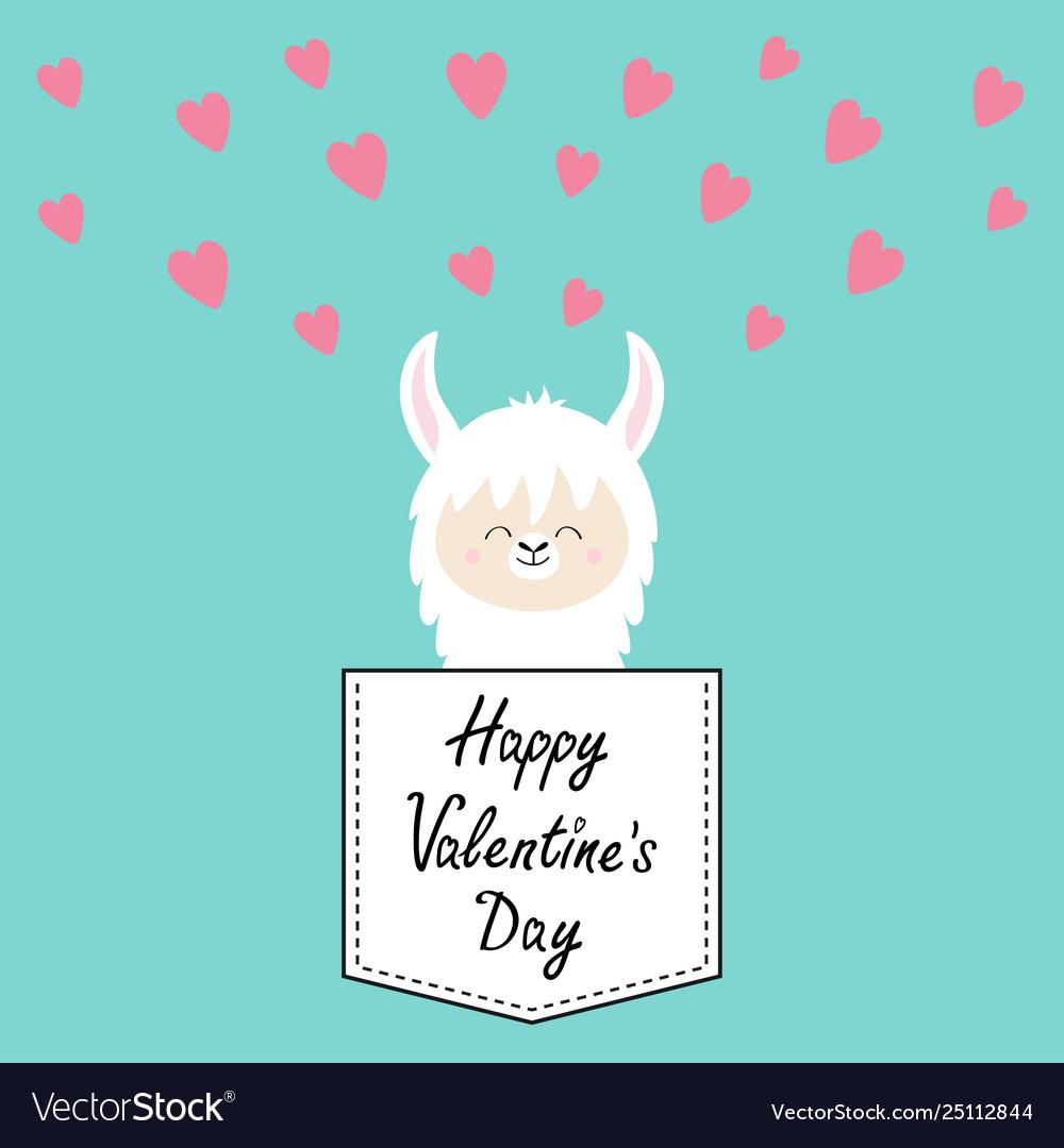 Happy valentines day alpaca llama face sitting in.