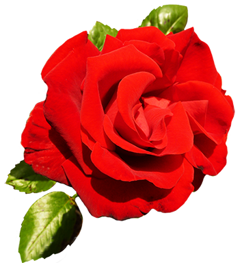 Clipart of Valentine Day Roses.