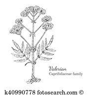 Valerian Clipart and Illustration. 23 valerian clip art vector EPS.