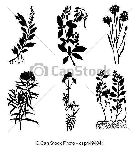Valerian Illustrations and Stock Art. 76 Valerian illustration and.