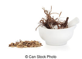Picture of Valerian roots (dried).