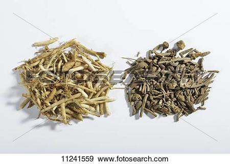 Stock Photograph of Chopped valerian root, fresh and dried.