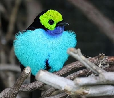 1000+ images about Aves de colombia on Pinterest.