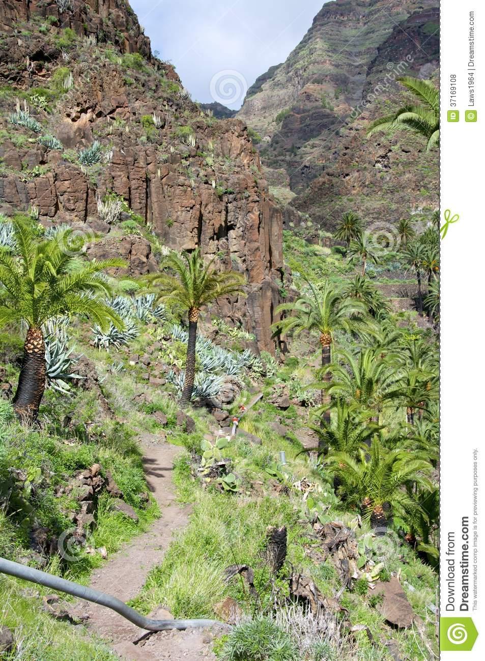 Hiking In The Valle Gran Rey On La Gomera. Royalty Free Stock.