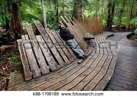 Stock Photograph of Viewing platform for giant Swamp Gum.
