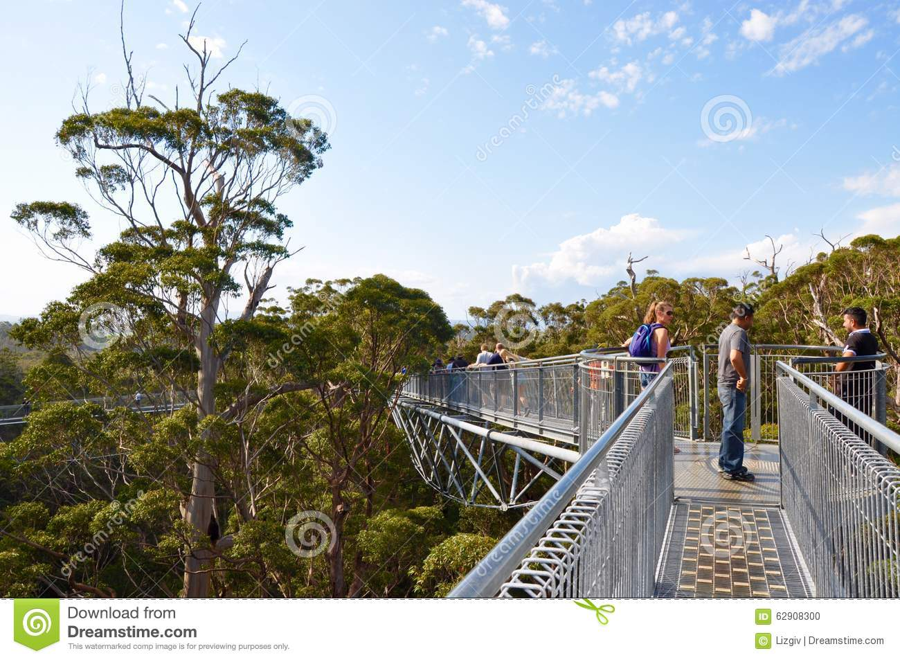 Tree Top Walk In The Valley Of The Giants: Denmark, Western.