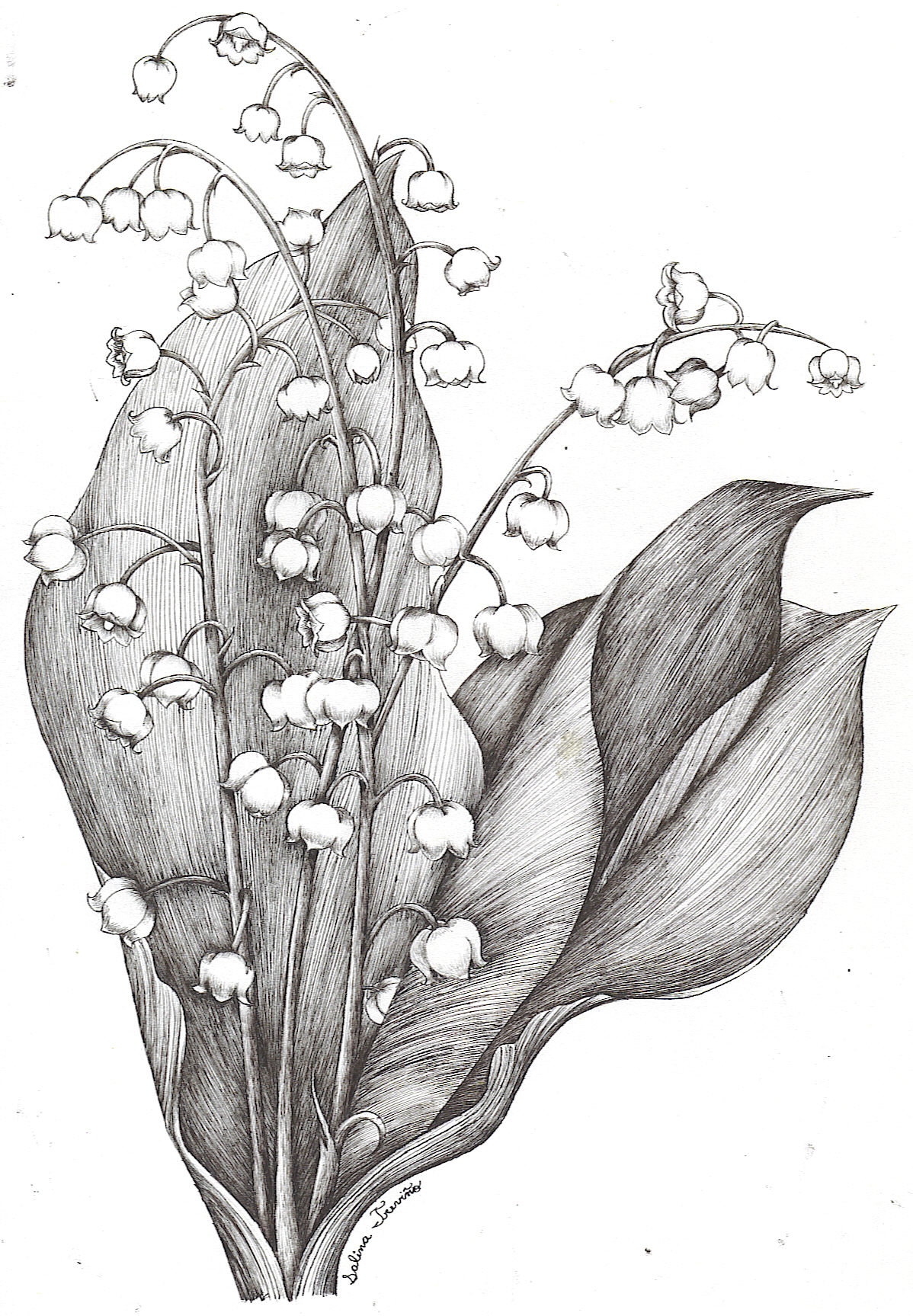 Lily Of The Valley Tattoo Meaning.