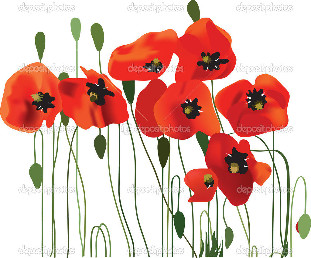 Vallmo bakgrund, blomma konst, vektor illustration — Stock Vektor.